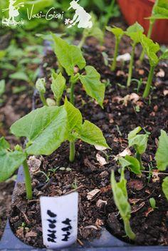 Gradina in luna Aprilie Seedlings, Plants, Garden