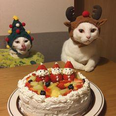 Merry Christmas✨ め食べ物