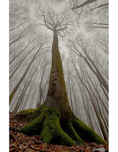 Google Image Result for http://www.cruzine.com/wp-content/uploads/2010/11/001-trees.jpg