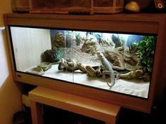 aquário iguana