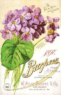 Burpee's 1897