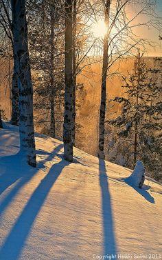 Snowy woods at sunset - Utajärvi, Oulun lääni, Finland