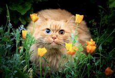 Kitty, kitty...  :0)