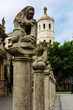 Leones de la Universidad de Valladolid,  #CastillayLeon #Spain