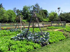 Edible Landscaping: Kitchen Garden   jardin potager   bauerngarten   köksträdgård (lettuce, cabbage and beans - Longwood Gardens)