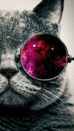Cat with pink sunnglasses ♥