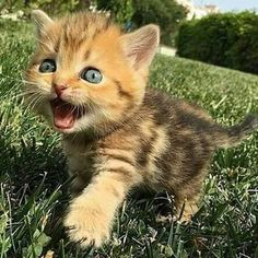 Cute kittens, kittens cutest baby, cute baby cats, kittens and puppies, kit Kittens And Puppies, Cute Cats And Kittens, Baby Cats, I Love Cats, Kittens Cutest, Kittens Meowing, Newborn Kittens, Kittens Playing, Pretty Cats