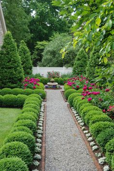 Boxwoods neatly line a path