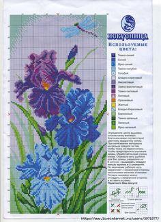 blue blue iris