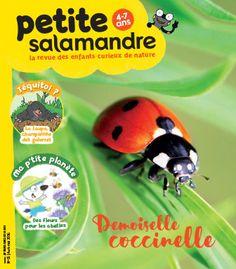 Demoiselle coccinelle (n°5)