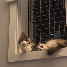 Pretty Animals, Cute Little Animals, Pretty Cats, Pets 3, Cute Baby Cats, Cat Aesthetic, Cat Boarding, Fat Cats, Cat Memes