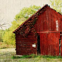 Velvet Red Country(I photographed this Velvet Red barn in Illinois on a country drive with my Dad. I was fascinated by the changing colors in the leaves cascading along the roof line of the barn.) by Life-In-Reflections