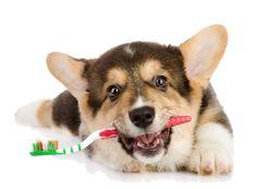 Der BARF-Blog: Zahnstein beim Hund – was kann man tun?