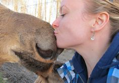 Nothing like a kiss from a moose! Canada Trip, Canada Travel, Bowen Island, My Road Trip, Trotter, Resort Spa, Wilderness, Ontario, Moose