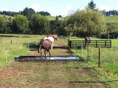 Horse Paddock, Horse Stables, Horse Barns, Horse Horse, Permaculture, Cross Country Jumps, Farm Layout, Horse Training, Training Tips