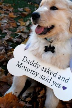 Creative Ways to Include Your Dog in Your Next Big Announcement… Or if dog comes with big announcement!