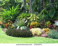 Tropical Landscaping (Foliage, Shrubs, Palms, Grass and Flowers) - stock photo