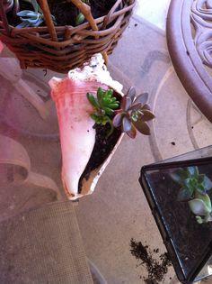 Creative Succulent Planters