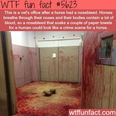 WHOA! ...The vet's office after a horse had a nosebleed! - WTF weird & Spooky-fun facts