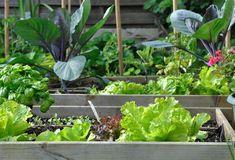 7 Steps to Growing a Victory Garden Garden Club, Garden Soil, Community Gardening, Plant Tags, Garden, Growing, Growing Vegetables, Water Plants, Victory Garden