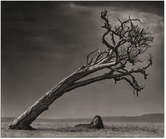 Black and White Animal Photography by Nick Brandt