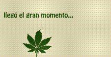 Mantequilla de marihuana (Guia con fotos)