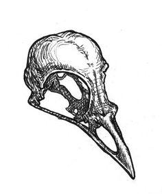Ideas Bird Skull Sketch For 2019 Bird Skull Tattoo, Crow Skull, Skull Tattoos, Skull Art, Animal Skull Drawing, Animal Skulls, Skull Anatomy, Anatomy Art, Gravure Illustration