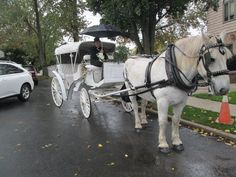 Our all white Vis a Vis carriage with our white Percheron horse pulling at a wedding on Staten Island in the pouring rain.