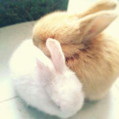bunny love <3