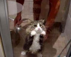 the most adorable shower cat ever