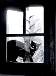 Willy Ronis ( * ) Le chat derrière la vitre, Gordes, France. 1957