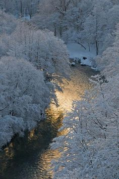 Winter Scenery: icy-blue river running through a snow covered wood Winter Szenen, I Love Winter, Winter Magic, Winter White, Foto Poster, Snow Scenes, All Nature, Winter Pictures, Winter Beauty