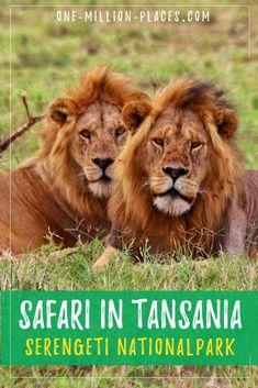 Morocco Travel, Africa Travel, Wolf Poses, Koh Lanta Thailand, Madagascar Travel, Serengeti National Park, Wildlife Safari, Parc National, Travel Companies