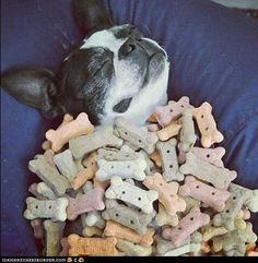 I Was Dreaming of Dog Biscuits and...IT CAME TRUE!
