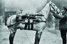 A million horses went to war... only 65,000 came back | The Sun ...