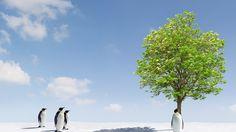 Penguins near a green tree Background HD Wallpaper Wallpaper