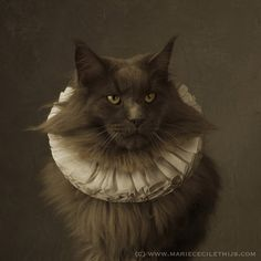 Cat with White Collar by Marie Cecile Thijs | (c) www.mariececilethijs.com