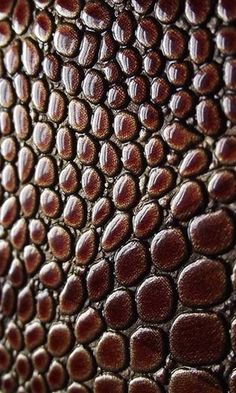 Lizard Skin Textures - natural surface pattern inspiration; reptile skin; nature's artwork