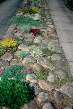 cottage garden path_2