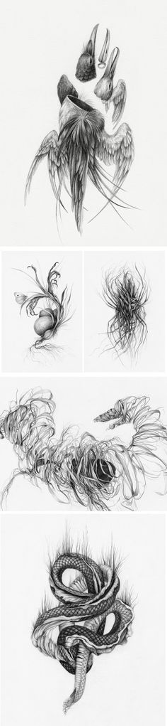 Haunted Bodies: A Collection of New Hybrid Drawings About Healing and Loss by Christina Mrozik Arte Horror, Horror Art, Drawing Skills, Life Drawing, Pretty Art, Cute Art, Amazing Drawings, Art Drawings, Colossal Art