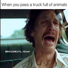 20 Vegan Memes That'll Surely Get You A Laugh Forget what other people have to say and just have fun being healthy. See this humorous vegan meme collection. Funny Vegan Memes, Vegetarian Memes, Vegan Vegetarian, Hilarious Memes, Grill Sandwich, Humor Vegetariano, Vegan Blog, Vegan Facts, Why Vegan