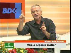 Los cuidados de la Begonia de Flor, por Álvaro Ruiz Moreno en Bien De Córdoba (BDC) - YouTube
