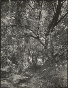 [Forest]; August Sander (German, 1876 - 1964); about 1930 - 1940; Gelatin silver print; 22.7 x 17.3 cm (8 15/16 x 6 13/16 in.); 84.XM.152.129; Copyright: © J. Paul Getty Trust