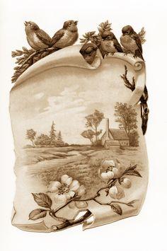 .Beautiful Sparrow Landscape label