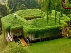 I wonder if they need to cut the grass? hmm