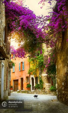 Some old town in Provence #cats #Provance #France