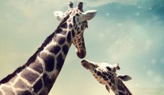 5-420x244 Giraffe, Animals, Some People, Thinking About You, Livres, Felt Giraffe, Animales, Animaux, Giraffes