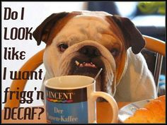 Funny English Bulldog, bulldog supplements  http://www.nuvet.com/81098  use code 81098 and ask for 15 % off on auto ship orders,