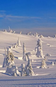 Lapland in winter, Riisitunturi National Park, Finland  Burrrrrr, not a place to put your head in my lap, land