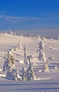 Lapland in winter, Riisitunturi National Park, Finland